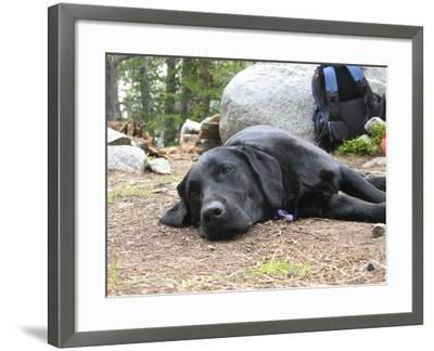 Portrait of a Pet Dog Resting Near a Backpack During a Hike in the Wind River Range-Michael Forsberg-Framed Photographic Print