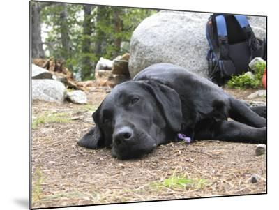 Portrait of a Pet Dog Resting Near a Backpack During a Hike in the Wind River Range-Michael Forsberg-Mounted Photographic Print