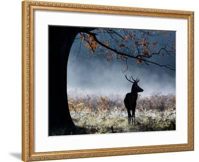 A Red Deer Stag in a Forest with Colorful Fall Foliage-Alex Saberi-Framed Photographic Print