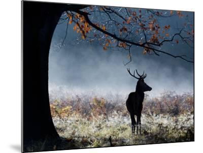 A Red Deer Stag in a Forest with Colorful Fall Foliage-Alex Saberi-Mounted Photographic Print