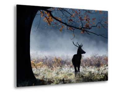 A Red Deer Stag in a Forest with Colorful Fall Foliage-Alex Saberi-Metal Print