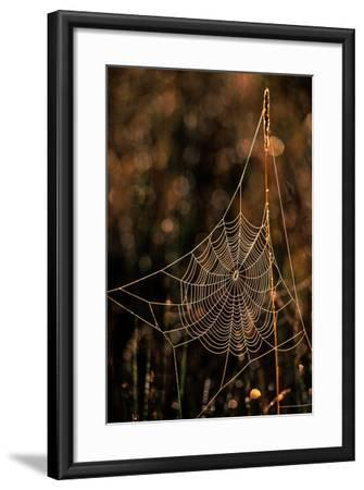 Dew on a Spider Web-Tom Murphy-Framed Photographic Print