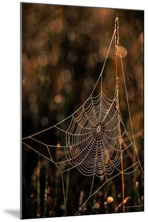 Dew on a Spider Web-Tom Murphy-Mounted Photographic Print