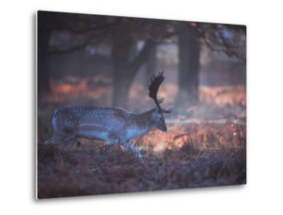 A Fallow Deer in the Early Morning Winter Mist in Richmond Park-Alex Saberi-Metal Print