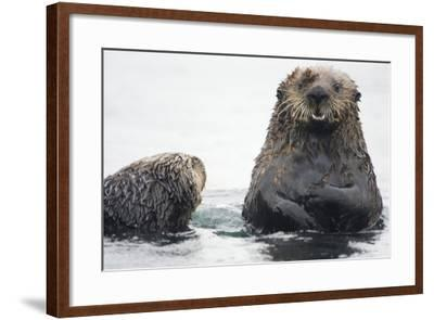 Portrait of a Northern Sea Otter, Enhydra Lutris Kenyoni-Bob Smith-Framed Photographic Print