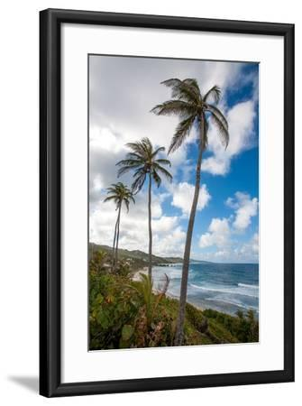 The Palm Lined and Rocky Beach at Bathsheba-Matt Propert-Framed Photographic Print