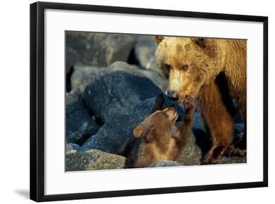 A Grizzly Bear Cub Nuzzles its Mother-Tom Murphy-Framed Photographic Print