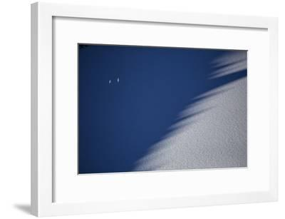 Snow Petrels Soar Above Snow Drifts in the Wohlthat Mountains in Antarctica's Queen Maud Land-Cory Richards-Framed Photographic Print