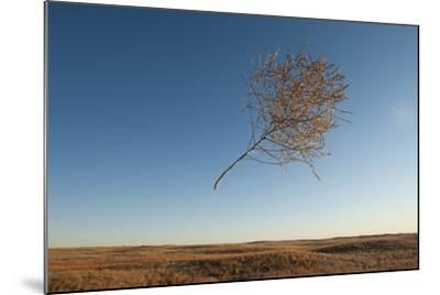 A Tumbleweed Blows Through the Air-Joel Sartore-Mounted Photographic Print