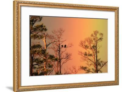 A Pair of Bald Eagles, Haliaeetus Leucocephalus, Illuminated by a Rainbow While Perched in a Tree-Robbie George-Framed Photographic Print