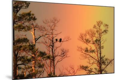 A Pair of Bald Eagles, Haliaeetus Leucocephalus, Illuminated by a Rainbow While Perched in a Tree-Robbie George-Mounted Photographic Print