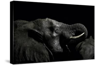 An African Elephant Emerges from the Dry Season Darkness to Drink at a Waterhole-Jason Edwards-Stretched Canvas Print