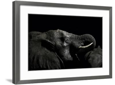 An African Elephant Emerges from the Dry Season Darkness to Drink at a Waterhole-Jason Edwards-Framed Photographic Print