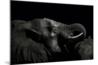 An African Elephant Emerges from the Dry Season Darkness to Drink at a Waterhole-Jason Edwards-Mounted Photographic Print