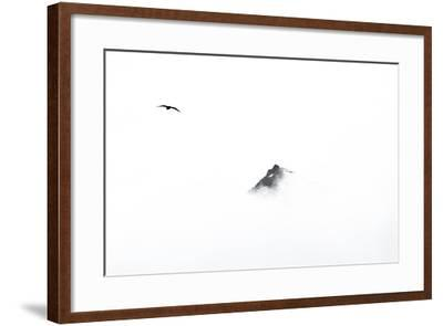A Skua Flying in the Clouds Near a Mountain Top-Ira Meyer-Framed Photographic Print