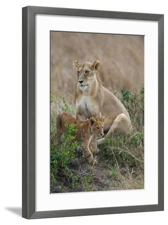 Portrait of a Lioness, Panthera Leo, and Her Cub-Bob Smith-Framed Photographic Print