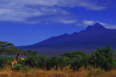 Giraffes and Acacia Trees with a Moonlit Backdrop of Mount Kilimanjaro and Mawenzi Peak-Babak Tafreshi-Stretched Canvas Print