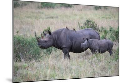 Portrait of a Rhinoceros and Her Calf in a Grassland. Oxpeckers are on the Mother's Back-Bob Smith-Mounted Photographic Print