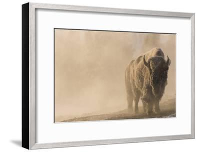 A Frost Covered Bison Stands in a Steamy Landscape-Tom Murphy-Framed Photographic Print