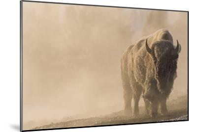 A Frost Covered Bison Stands in a Steamy Landscape-Tom Murphy-Mounted Photographic Print
