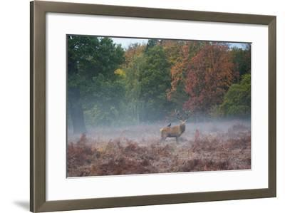 A Red Deer Stag Stands Against an Autumn Backdrop with a Jackdaw Perched on His Back at Sunrise-Alex Saberi-Framed Photographic Print