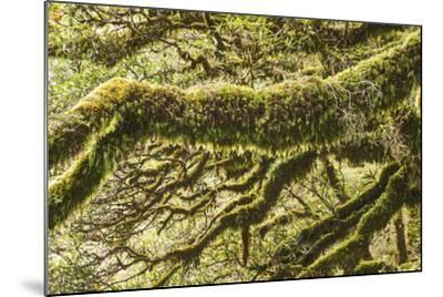 Moss, Lichen, Liverwort, and Other Clinging Greenery Cover Tree Limbs-Michael Melford-Mounted Photographic Print