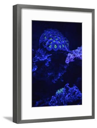 Fluorescent Coral-Kike Calvo-Framed Premium Photographic Print