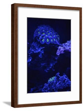 Fluorescent Coral-Kike Calvo-Framed Photographic Print
