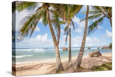 The Palm Lined Beach at Bathsheba-Matt Propert-Stretched Canvas Print