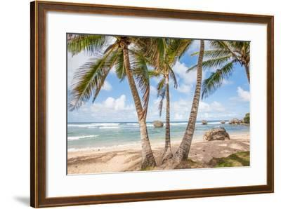 The Palm Lined Beach at Bathsheba-Matt Propert-Framed Photographic Print