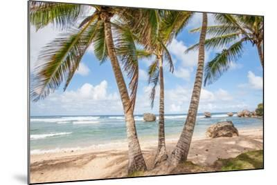 The Palm Lined Beach at Bathsheba-Matt Propert-Mounted Photographic Print