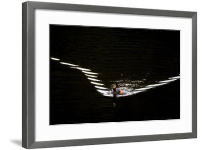 Water Ripples Behind an Eared Grebe, Podiceps Nigricollis, Swimming in Calm Water-Robbie George-Framed Photographic Print