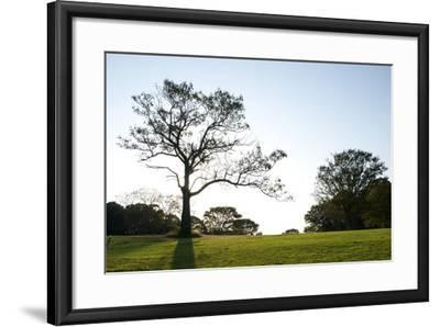 Showa No Mori Park in Tokyo-Heather Perry-Framed Photographic Print