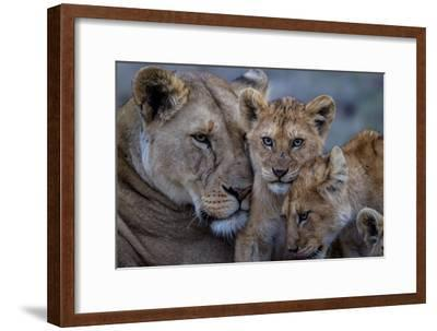 A Remote Car Captures Lion Cubs from the Vumbi Pride with a Lioness-Michael Nichols-Framed Photographic Print