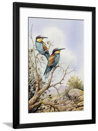 Bee-Eaters-Carl Donner-Framed Giclee Print