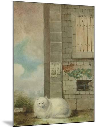 White Persian Cat-Laslett John Pott-Mounted Giclee Print