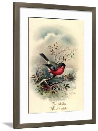 Fröhliche Weihnachten, Rotkehlchen, Erithacus Rubecula--Framed Giclee Print