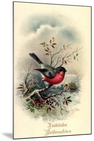 Fröhliche Weihnachten, Rotkehlchen, Erithacus Rubecula--Mounted Giclee Print