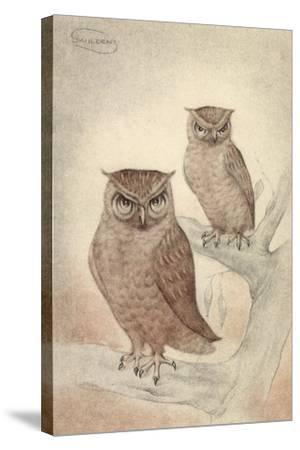 Künstler Swildens, Zwei Eulen Sitzen Auf Den Ästen Des Baumes--Stretched Canvas Print