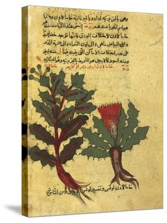 Using Herbs, Miniature from a Work by Al-Ghafiqi, Arabic Manuscripts, 1582--Stretched Canvas Print