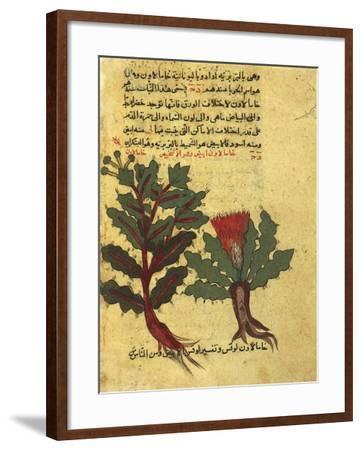 Using Herbs, Miniature from a Work by Al-Ghafiqi, Arabic Manuscripts, 1582--Framed Giclee Print