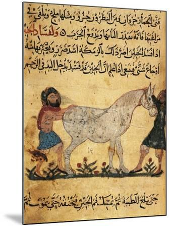 A Man Assisting a Mare Giving Birth to a Foal, Miniature from a Treatise on Horses--Mounted Giclee Print
