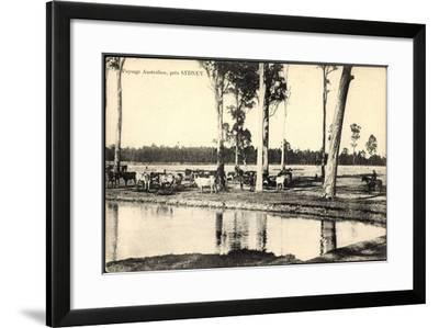 Sydney in Australien, Viehhaltung, Kuhherde Am Fluss--Framed Giclee Print