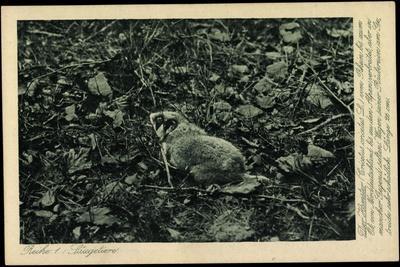 Säugetier, Hamster, Cricetus Cricetus L, Feldhamster, Schädling, Getreide--Framed Giclee Print