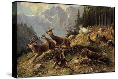 Künstler Hirsche Am Waldrand, Aufgeschreckt Und Fliehen--Stretched Canvas Print