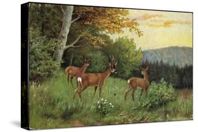 Hirsche, Junge Rehkitze Und Hirsche Am Waldesrand--Stretched Canvas Print