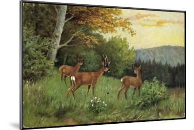 Hirsche, Junge Rehkitze Und Hirsche Am Waldesrand--Mounted Giclee Print