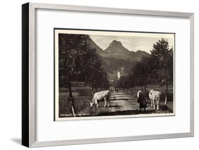 Oberaudorf Am Inn, Rinderherde Kommt Von Der Weide--Framed Giclee Print