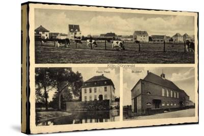 Köln Dünnwald, Haus Haan, St. Josef, Rinderherde Auf Dem Feld--Stretched Canvas Print