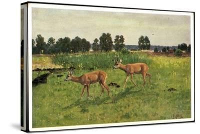 Künstler Christian Haug, Junge Rehe Auf Der Grünen Wiese--Stretched Canvas Print